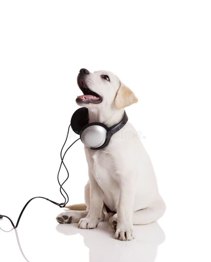psia słuchająca muzyka zdjęcie royalty free