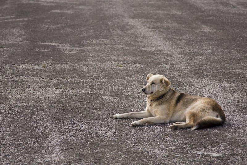 psia samotna street obrazy royalty free