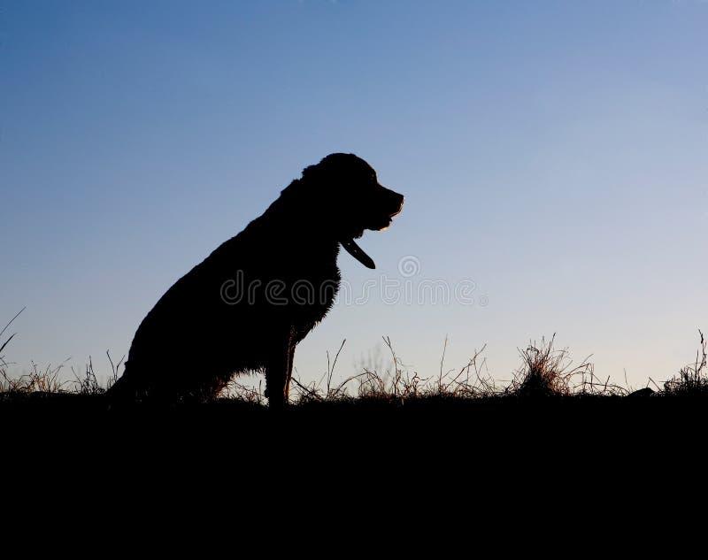 psia sylwetka obraz stock