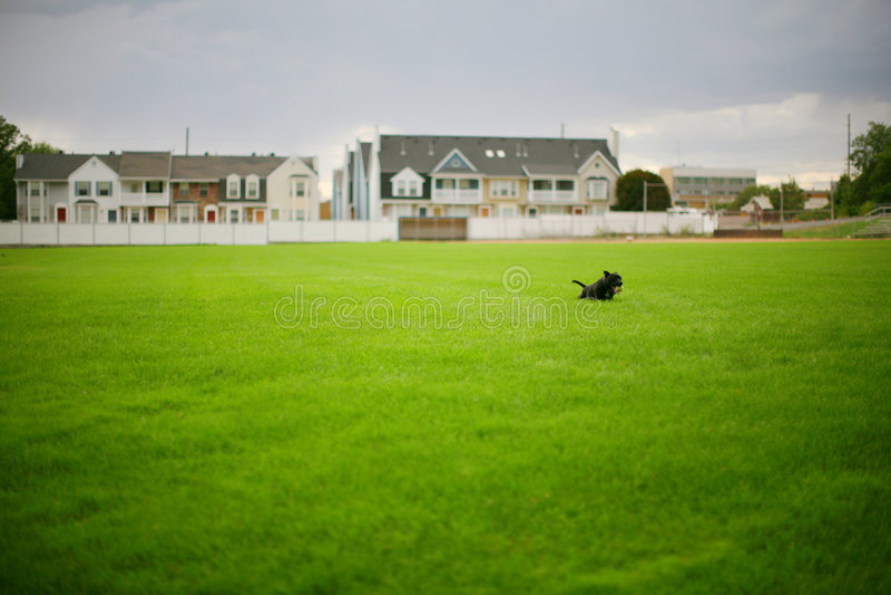 psia trawy. zdjęcie royalty free
