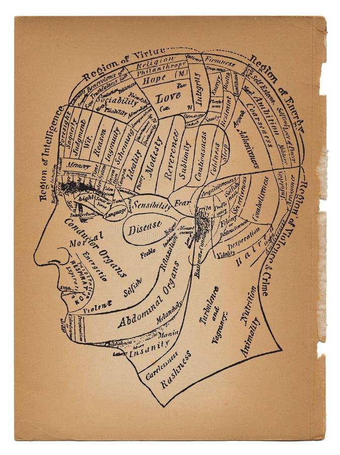 Psicologia ou ilustração médica da cabeça masculina