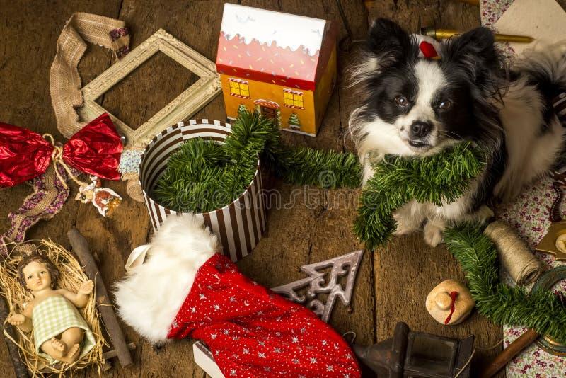 Psie kartki bożonarodzeniowa, niegrzeczny szczeniak fotografia royalty free