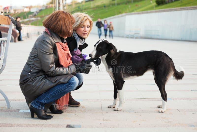 psie kobiety zdjęcia stock