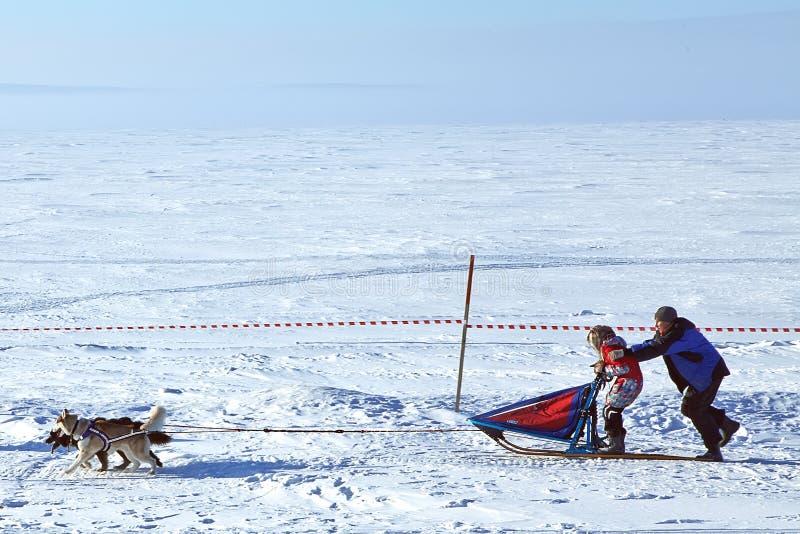 psiego łuskowatego musher bieżna sania zima obrazy royalty free