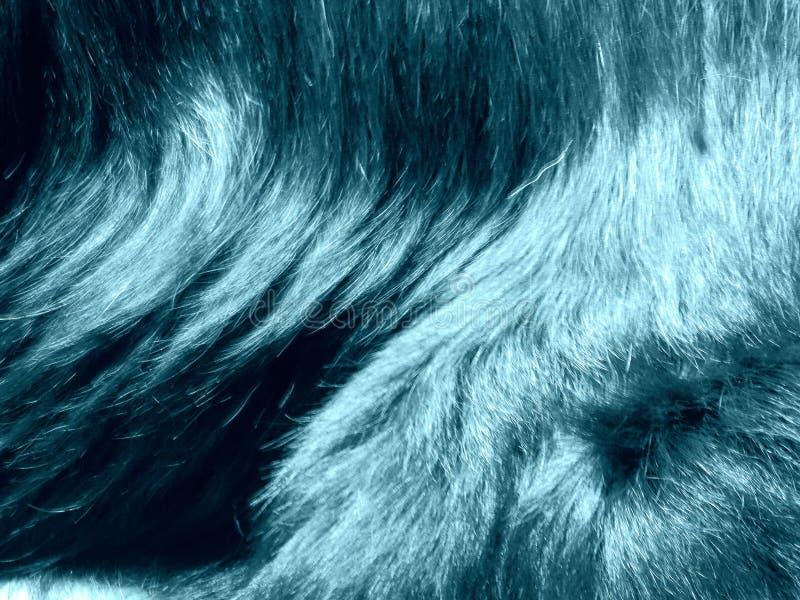 psiego włosy wzór obraz stock