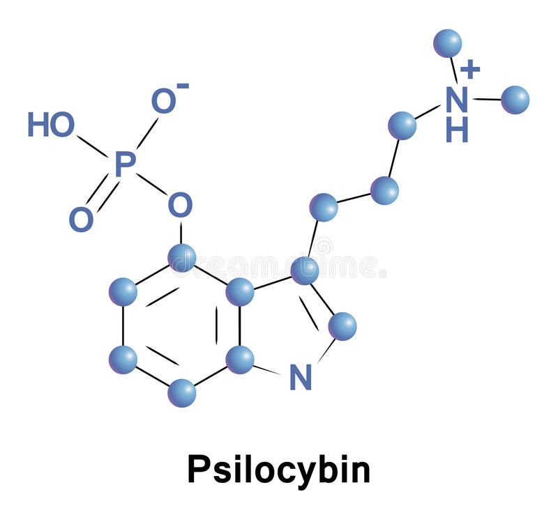 Psilocybin psychedelic compound of mushrooms. Psilocybin is a naturally occurring psychedelic compound produced by more than 200 species of mushrooms vector illustration