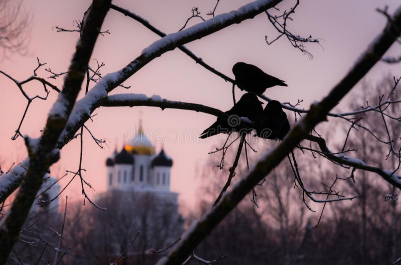Pskov city. Winter time. Branch with birds in fron of stock photos
