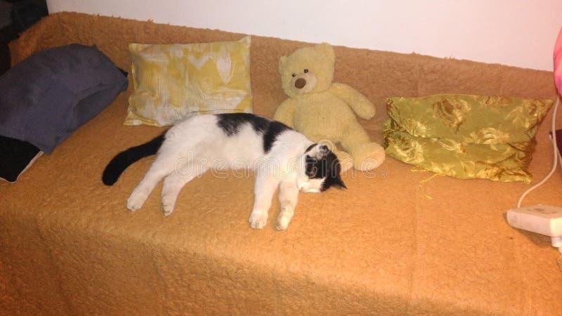 Pssst sonos do gato do silêncio foto de stock royalty free