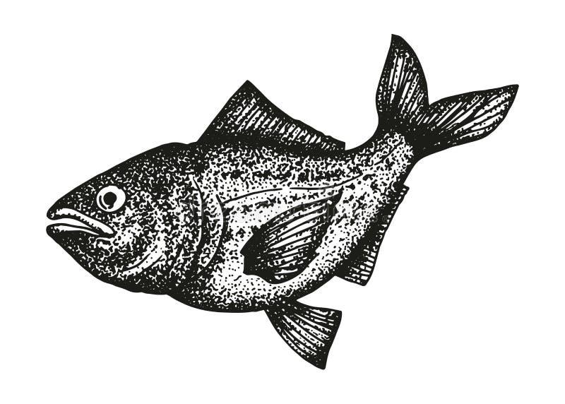 Pstrąg ryba nakreślenie ilustracja wektor