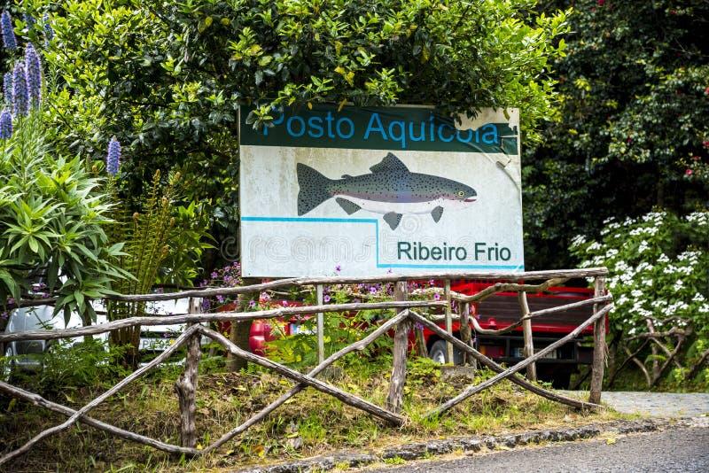 Pstrągowy gospodarstwo rolne przy theVillage Ribeiro Frio na wyspie madera Portugalia obraz royalty free
