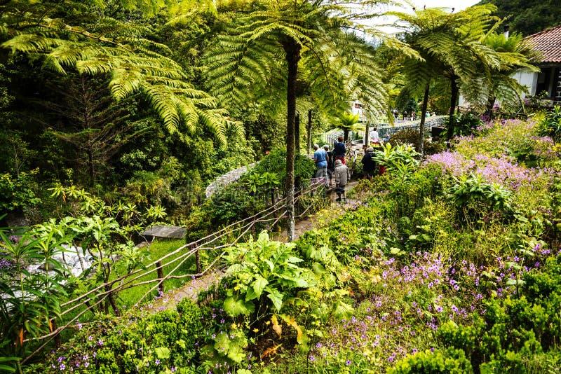 Pstrągowy ogród przy wioską Ribeiro Frio na wyspie madera Portugalia i gospodarstwo rolne fotografia stock