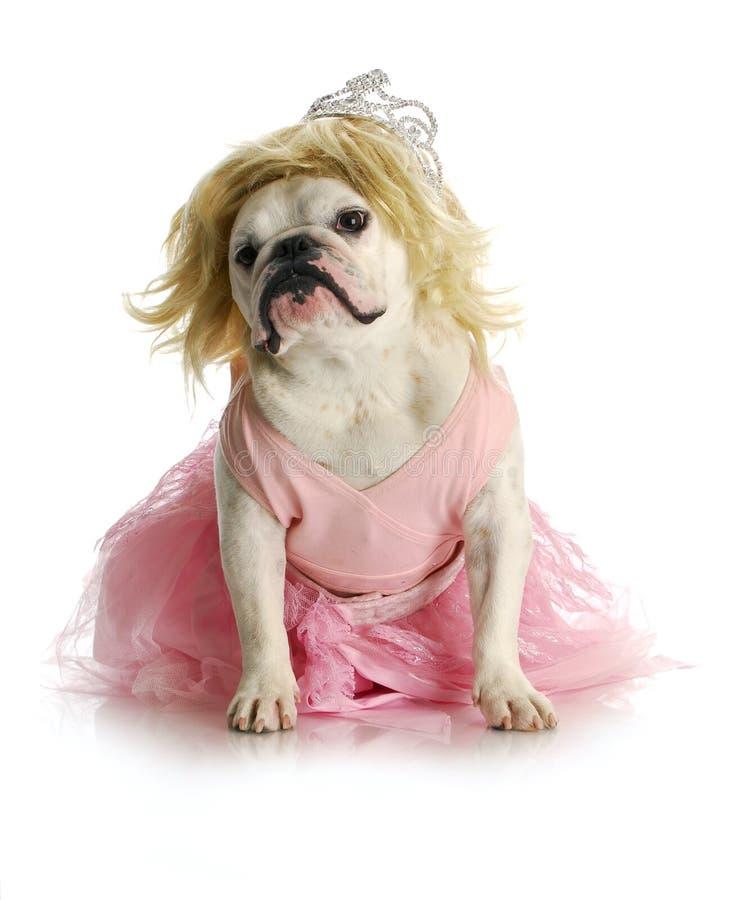 Psujący pies fotografia royalty free