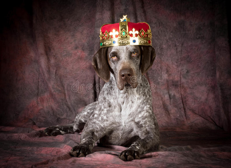 Psujący pies obrazy royalty free