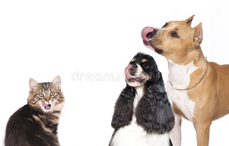 Psy i koty obraz royalty free