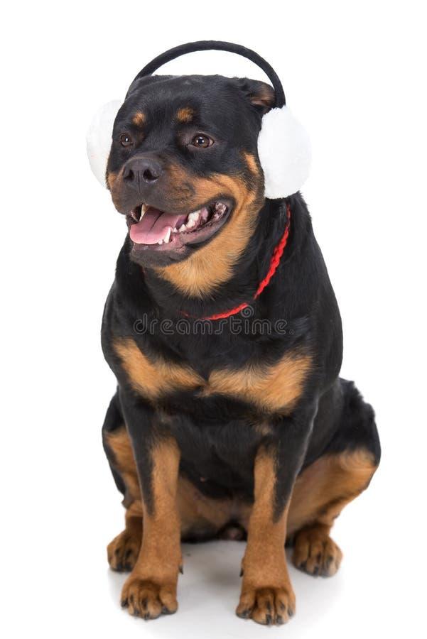 psy obrazy royalty free