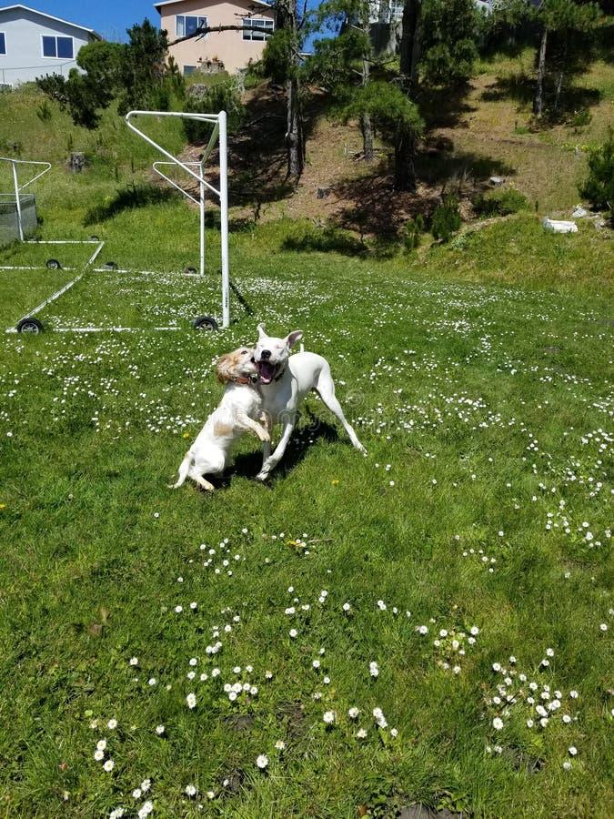 Psy bawić się przy parkiem zdjęcia royalty free