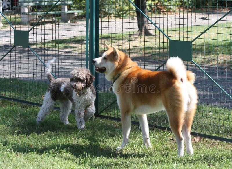 Psy Bawić się w psa parku zdjęcia royalty free