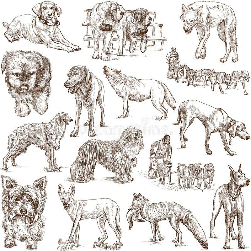 Psy (Canidae) ilustracji