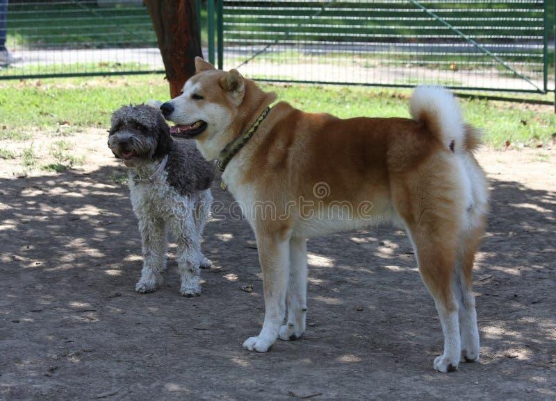 Psy chłodzi w psa parku zdjęcie stock