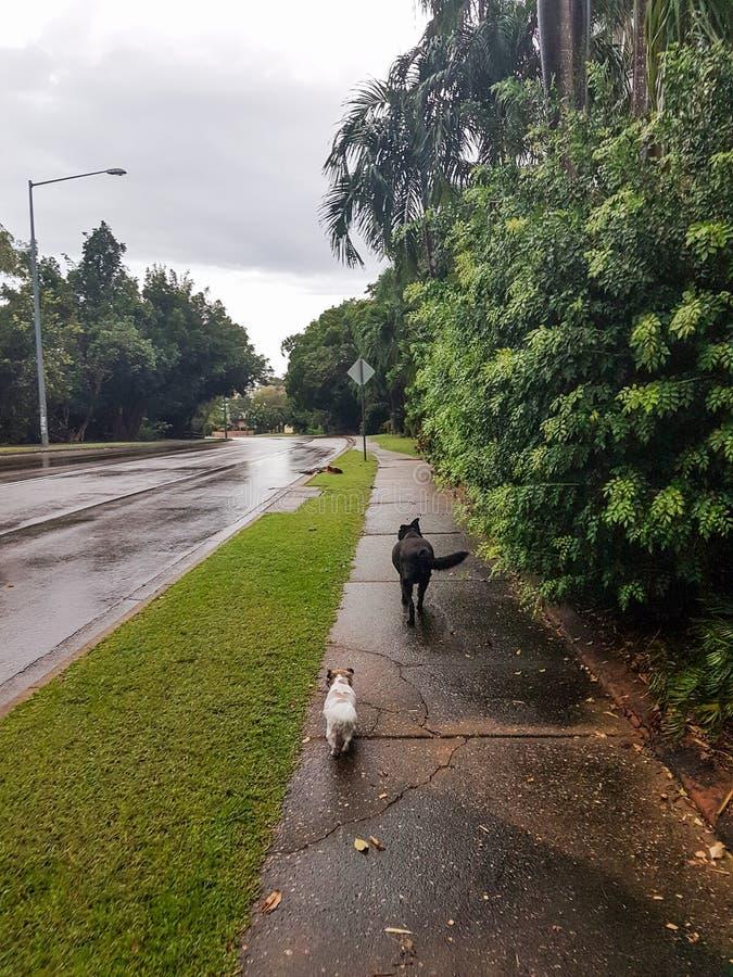 psy chodzić fotografia stock