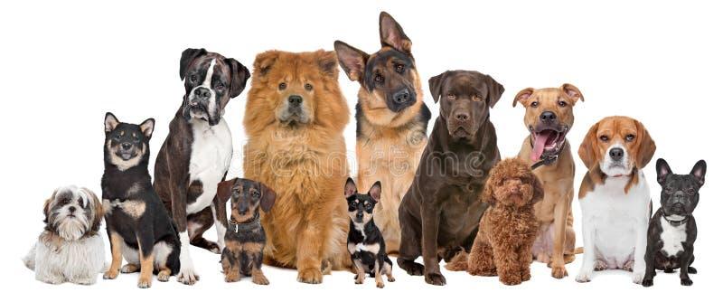 psy grupują dwanaście obrazy stock