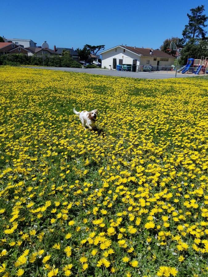 Psy i kwiaty zdjęcie stock