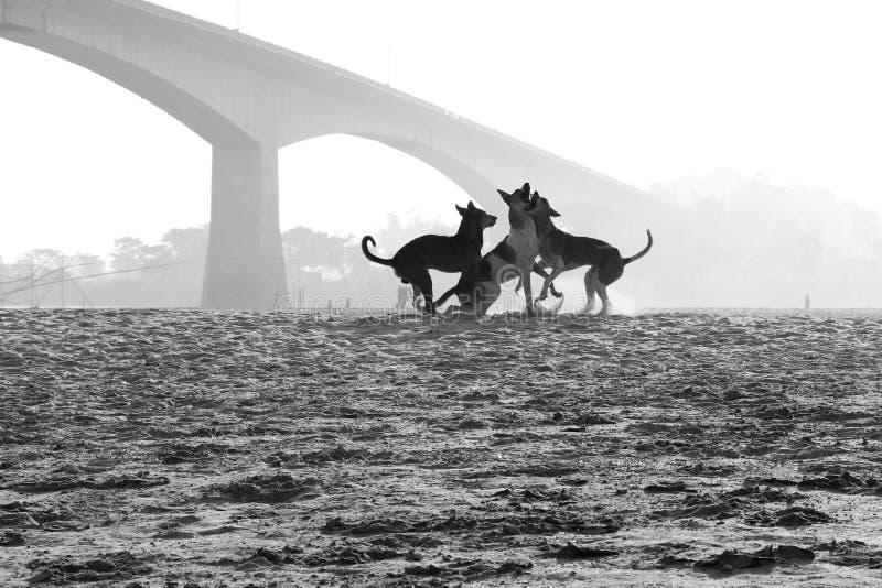 Psy i przyzwyczajenia zdjęcie royalty free