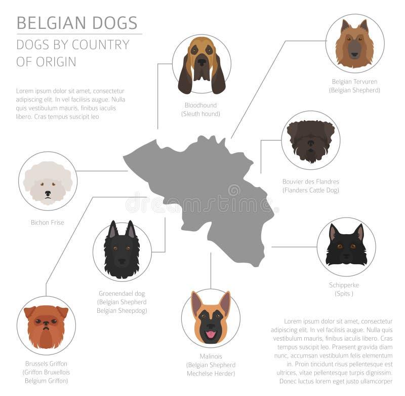 Psy krajem pochodzenia Belgia psa trakeny Infographic templ royalty ilustracja