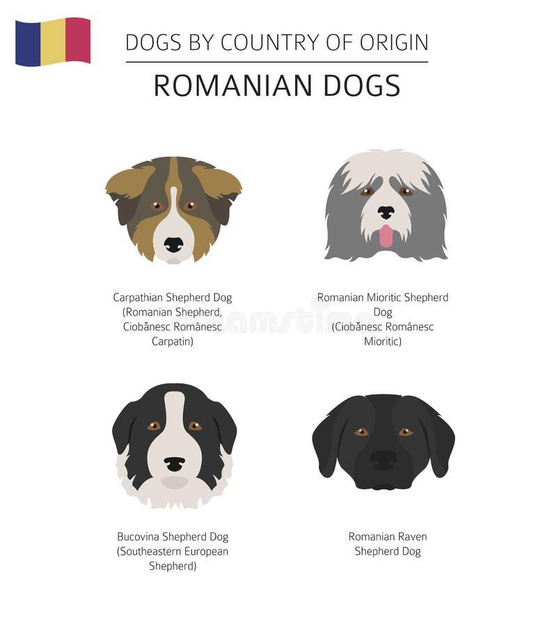Psy krajem pochodzenia Rumuńscy psów trakeny Infographic zastępcy royalty ilustracja