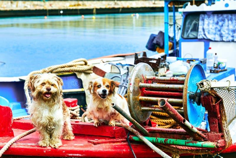 Psy na łodzi rybackiej zdjęcia stock