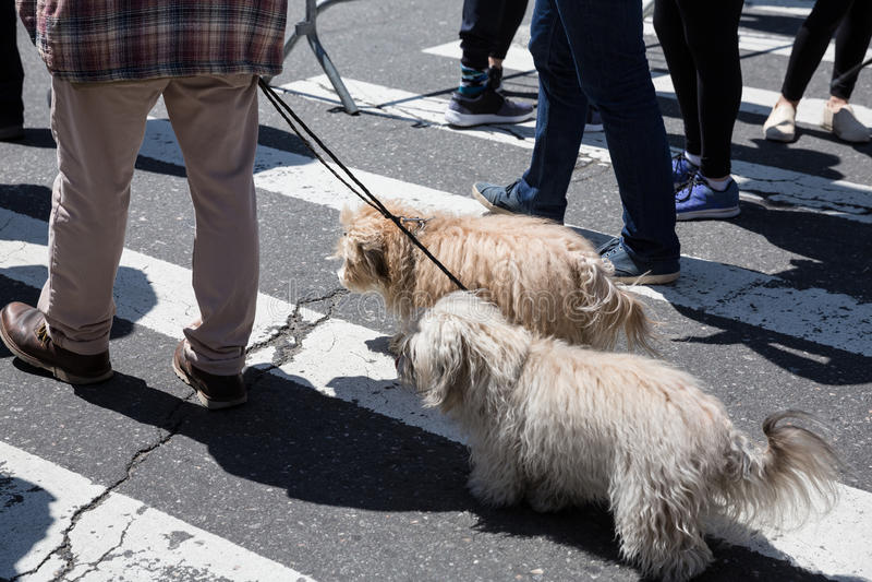Psy na ulicach NYC obraz royalty free