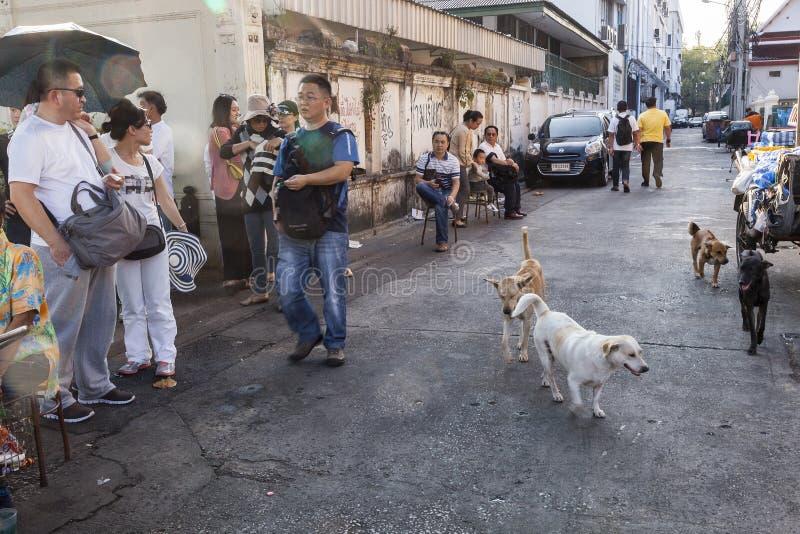 Psy na ulicie Bangkok fotografia royalty free