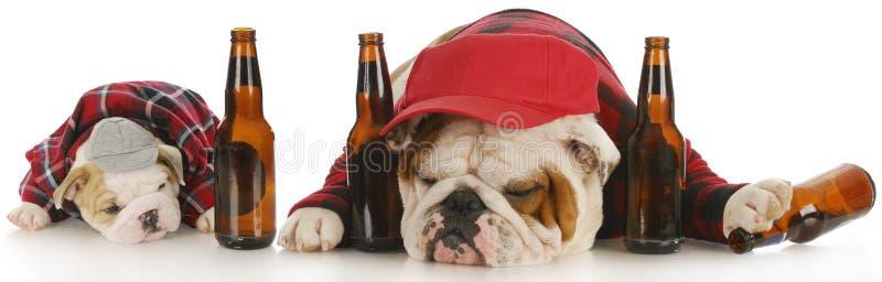 psy pijący zdjęcie stock