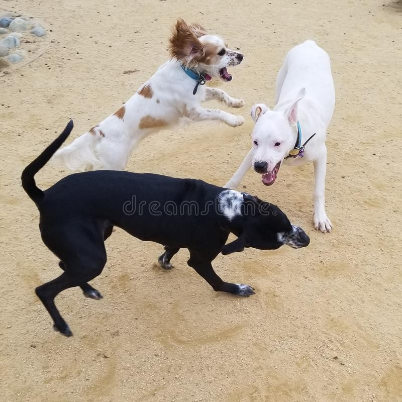 Psy przy parkiem zdjęcie royalty free