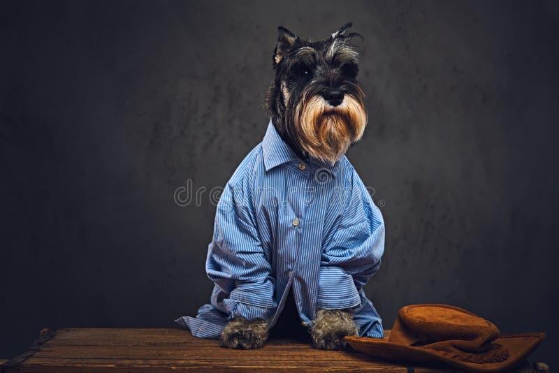 Psy ubierali w błękitnej koszula i okularach przeciwsłonecznych zdjęcia stock