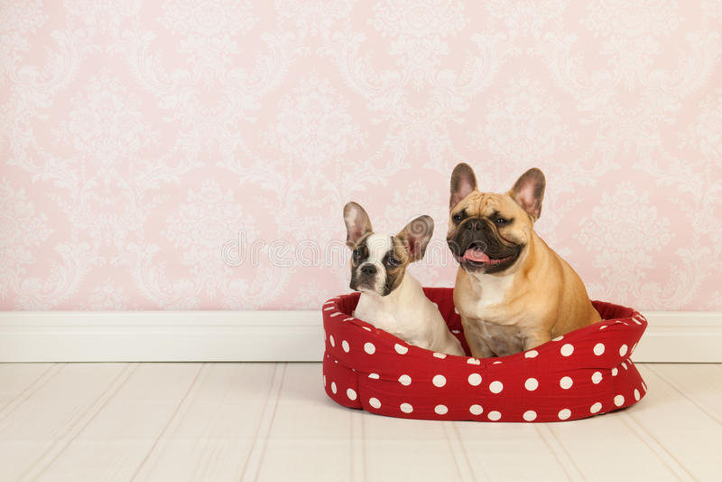 Psy W Koszu Zdjęcie Stock