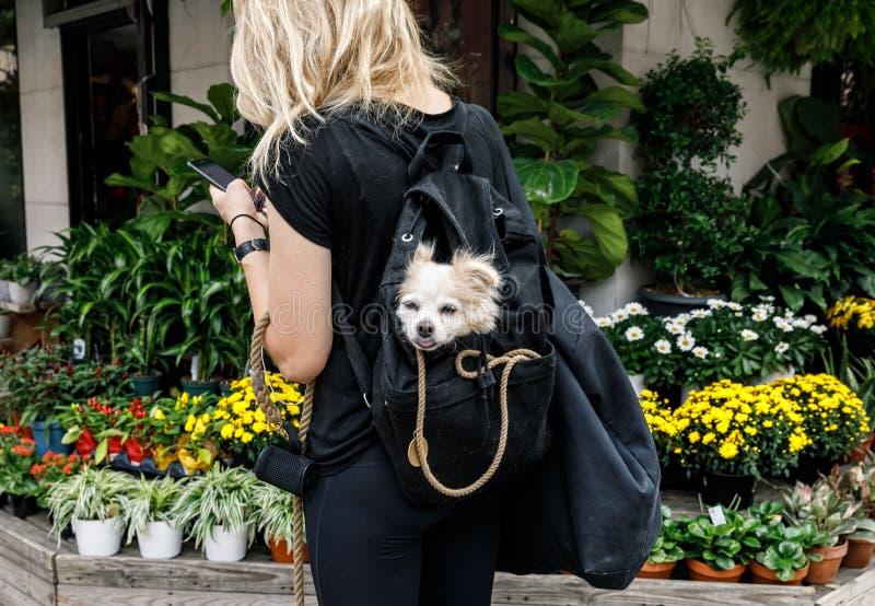 Psy w Miasto Nowy Jork obrazy royalty free