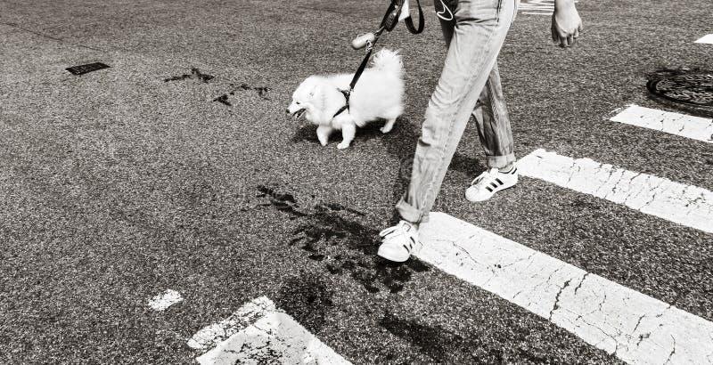 Psy w Miasto Nowy Jork zdjęcie royalty free