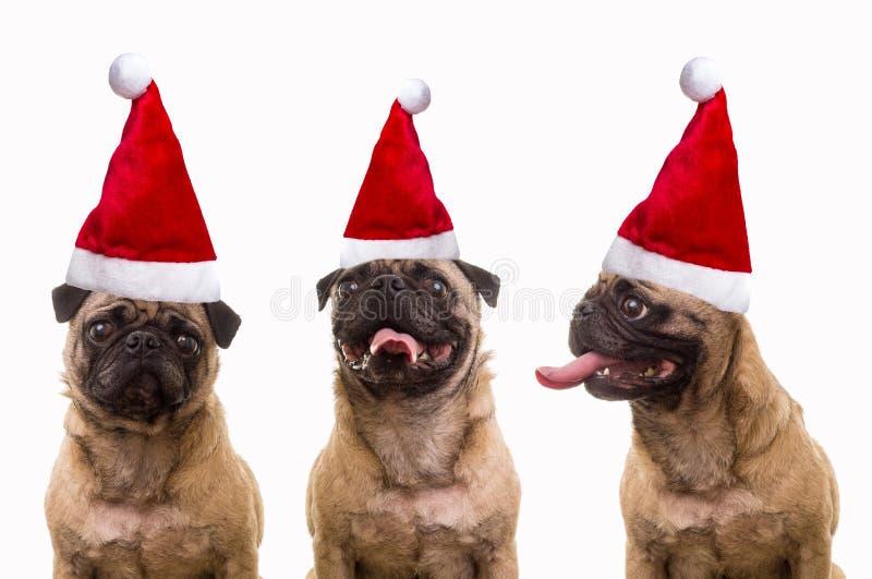 Psy w Santa kapeluszach obraz stock