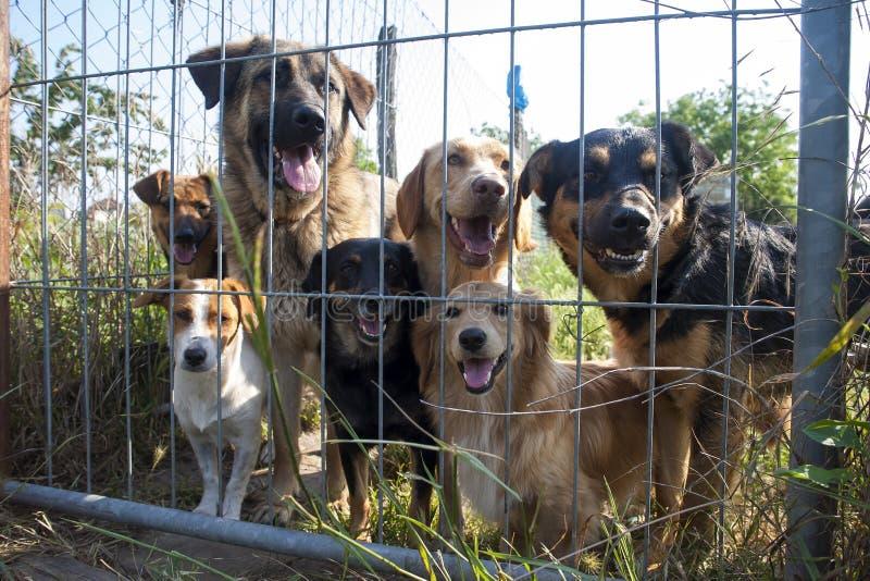 Psy za ogrodzeniem w schronieniu zdjęcie stock