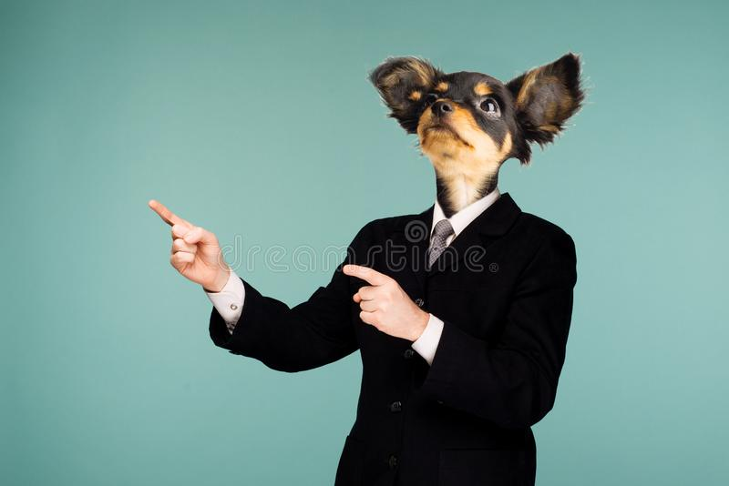 Psychedelic collage combining a man in a suit and a dog`s head. The character looking up and pointing to the side stock photos
