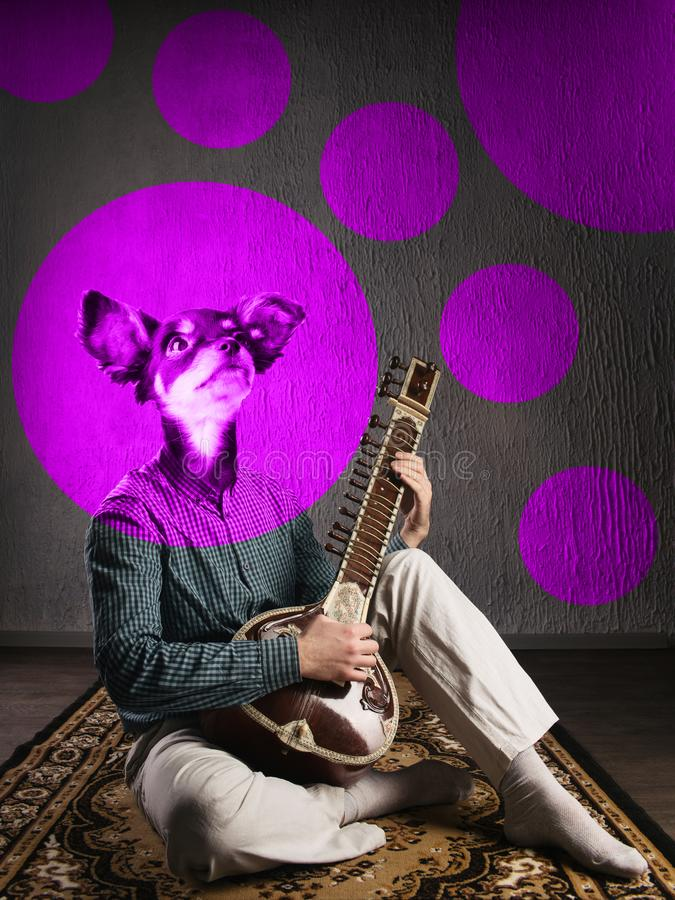 Psychedelic dog plays sitar. Funny collage. Animal protection concept stock photos