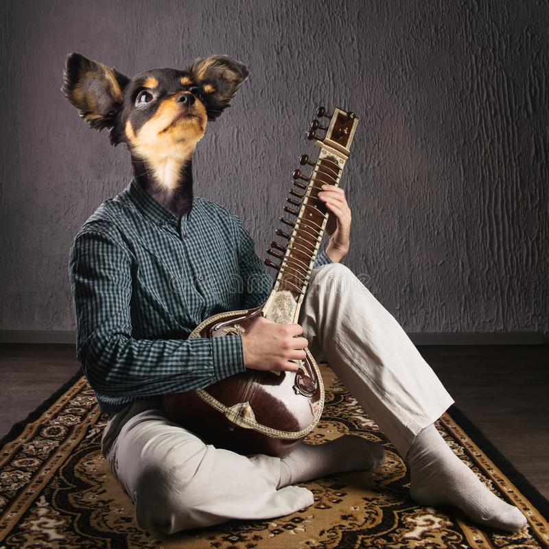 Psychedelic dog plays sitar. Funny collage. Animal protection concept stock photography