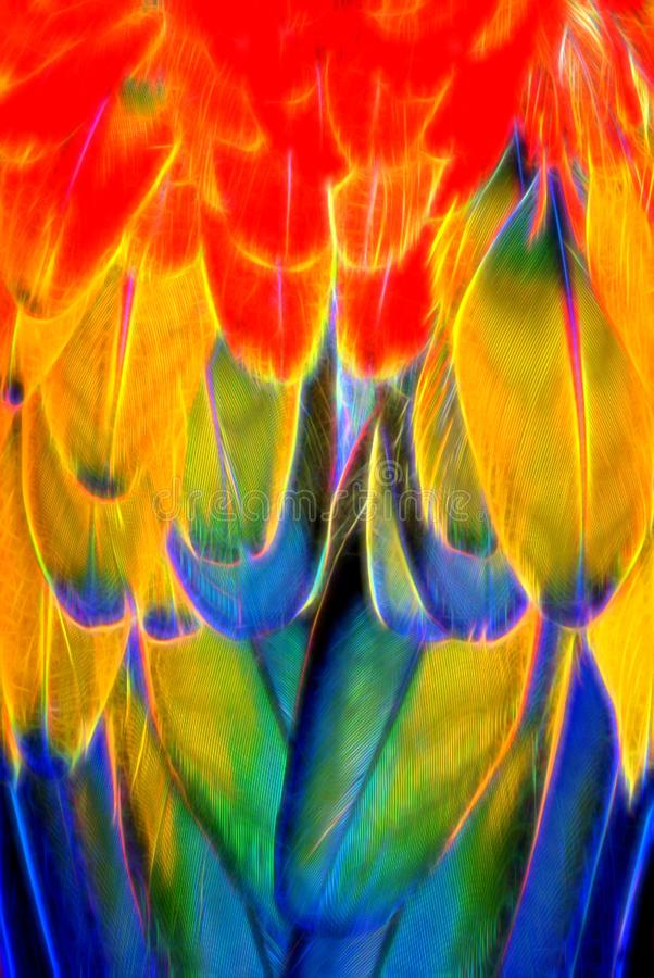Psychedelic Scarlet Macaw Feathers Achtergrond royalty-vrije illustratie