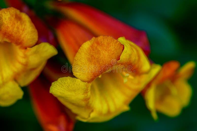 Psychedelische Farben der orange und gelben Blume stockbilder