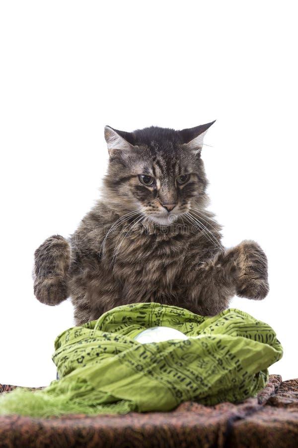 Psychiczny kot pomyślności narrator zdjęcia stock