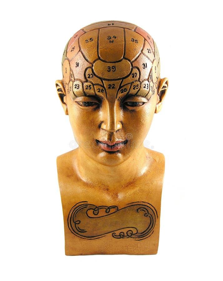 Psychology Model royalty free stock photography