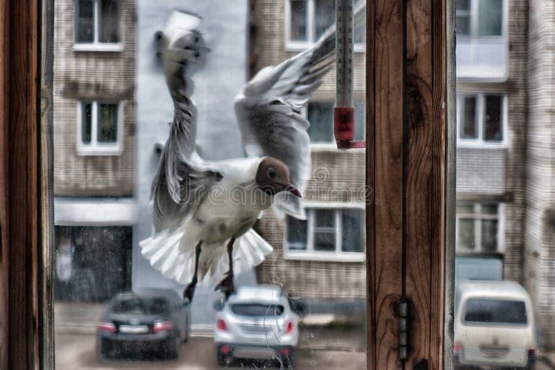 Psychopata ptak zdjęcia royalty free