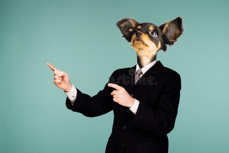 Psykedelisk collage som kombinerar en man i en dräkt och hunds huvud Teckenet som ser upp och pekar till sidan arkivfoton