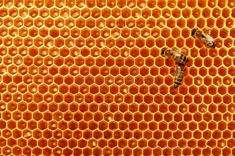 Pszczół honeycombs z miodem i pszczołami Apiculture obrazy royalty free
